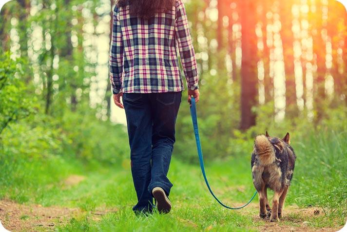 Hiking & Dogs – Passeggiate A 6 Zampe