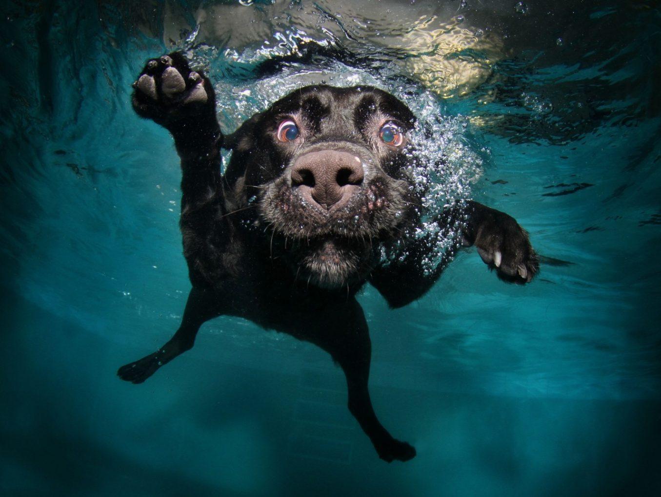 Il Cane e L'Acqua, il corretto approccio